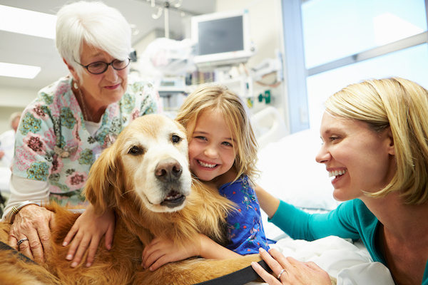 Therapy Dog: the Therepeutic Benefits of Dogs